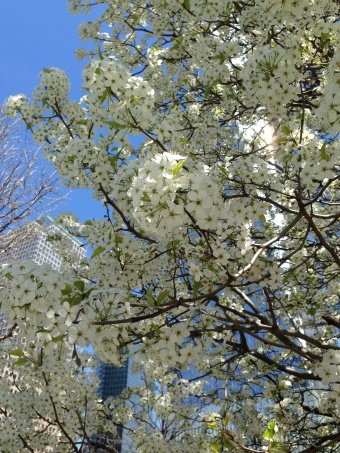 Ramoner au printemps